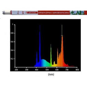 Diversa - T8 - 18W - 5000 °K Plant