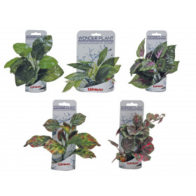 Wave Wonder Plant Series B 15-18 cm