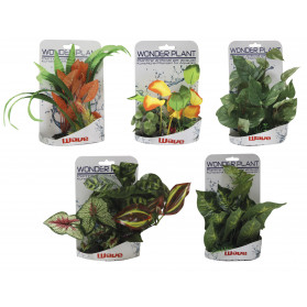 Wave Wonder Plant Series E 15-25 cm