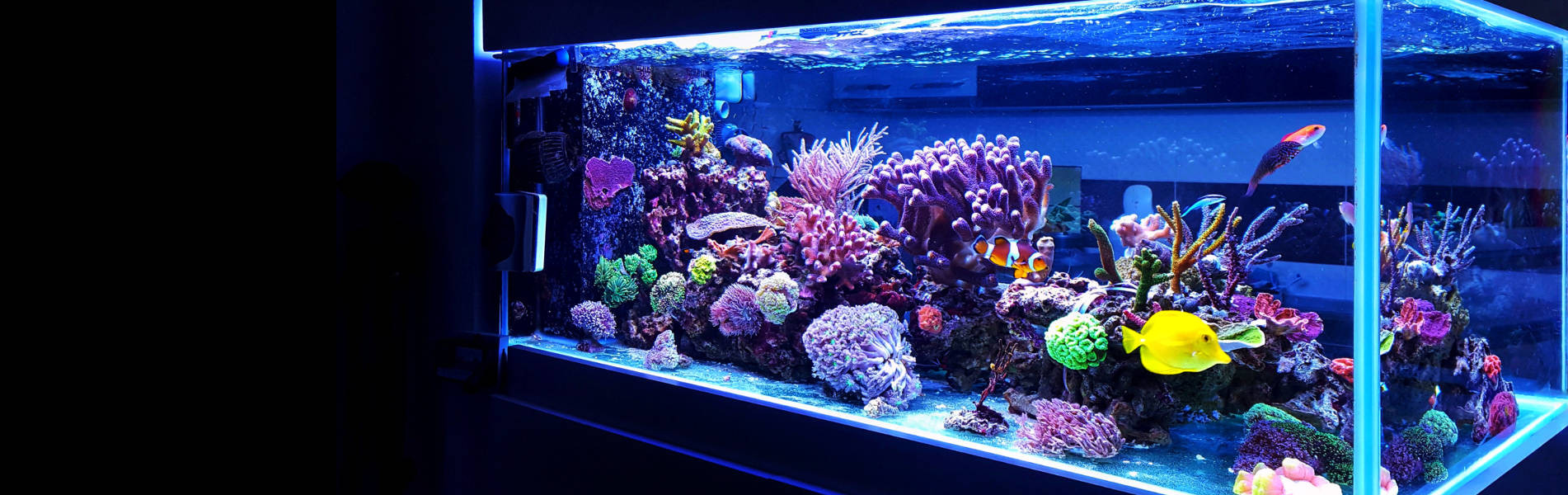 Aquariums and customized supports